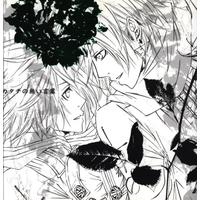 [Boys Love (Yaoi) : R18] Doujinshi - Novel - D.Gray-man / Lavi x Allen Walker (カタチの無い言葉) / Kiscaa rose